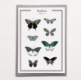 affiche papillon.jpg
