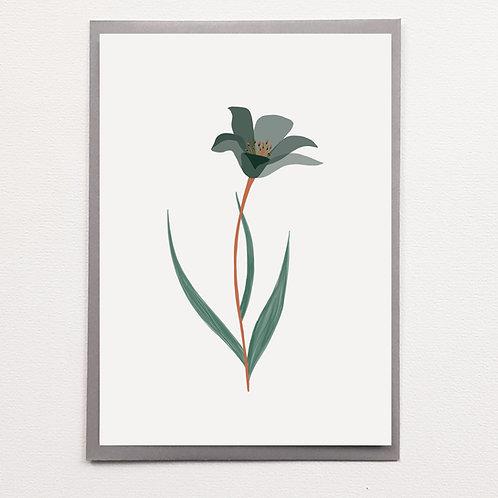 Affiche A5 Tulipe