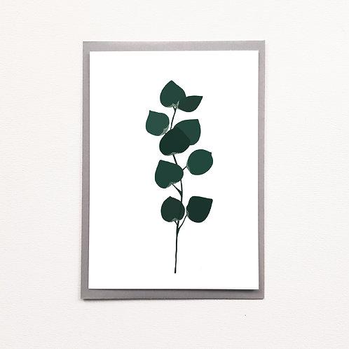 Carte eucalyptus