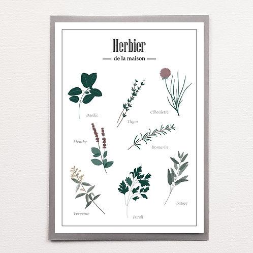 P-Herbier