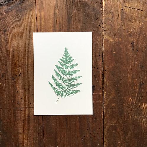 Carte Postale Fougère Verte