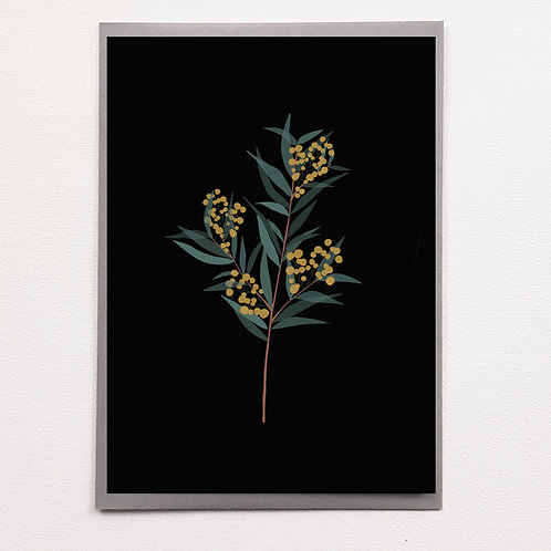 P-Carte Black Mimosa