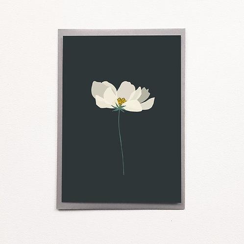 Carte black anémone