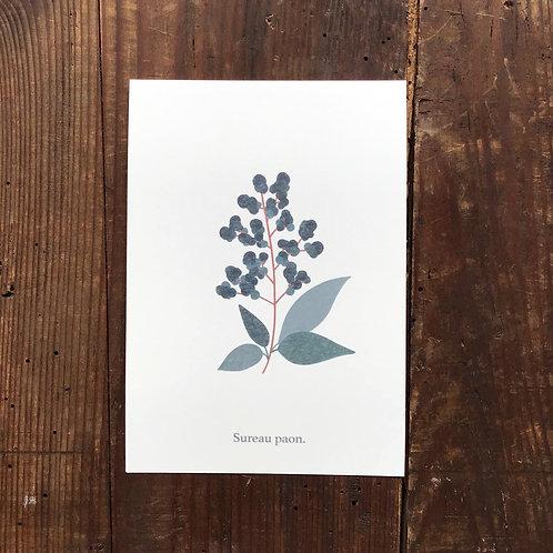 Carte postale Sureau