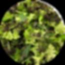 Mixed-Salad-Greens-220x220.png
