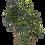 Thumbnail: Fiddle tree 240 cm