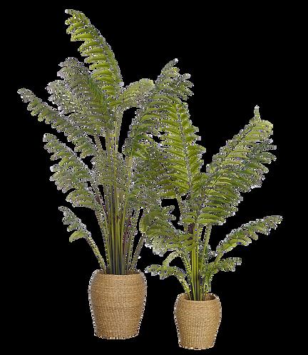 Leather fern 150 cm