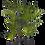 Thumbnail: Kentia Palm 180cm
