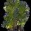 Thumbnail: Kentia Palm 300cm