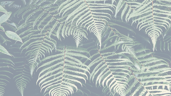 Tropical%2520Plant_edited_edited.png