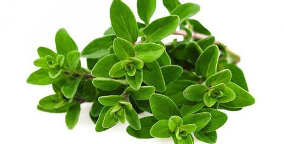 MARJORAM (BUNCH)