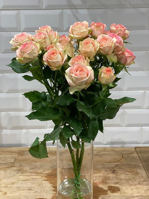 Roses branchues