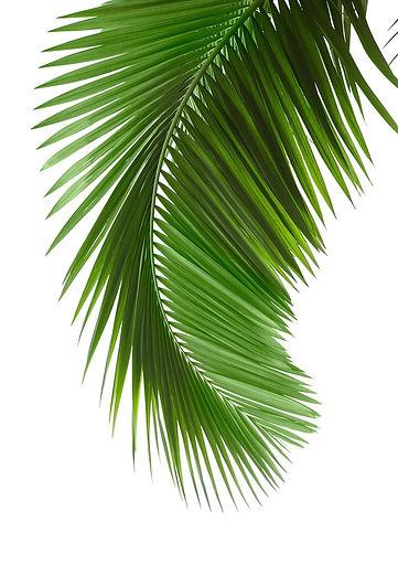Palm Leaf Poster.jpg