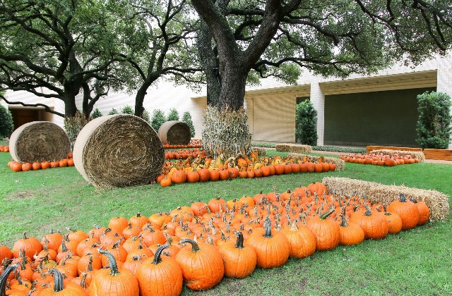 Event of The Week North Park Center's Pumpkin Patch