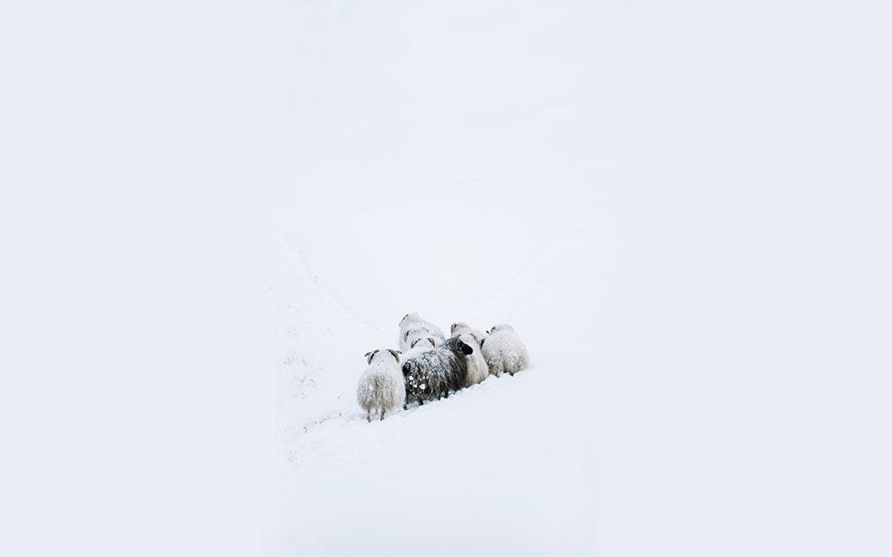 arriere plan mouton.jpg