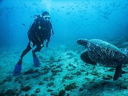 Dive Ayampe Ecuador