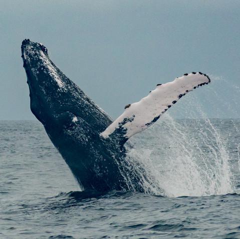 Whale Watching (seasonal)
