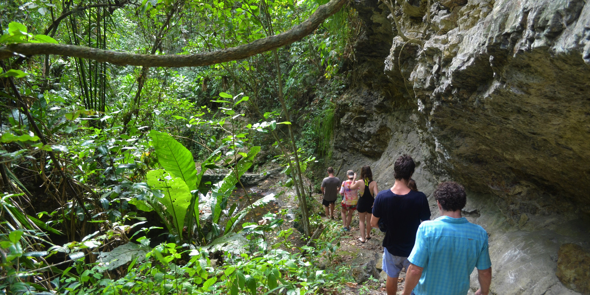 Jungle Tours