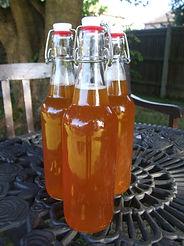 bottles of kombucha