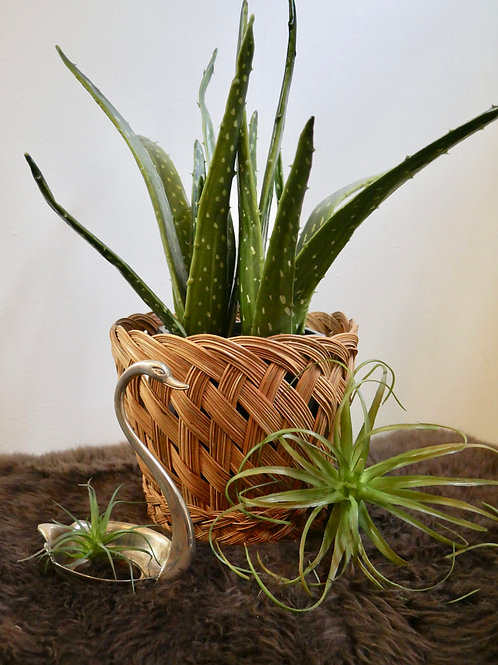 Woven Plant Basket