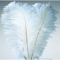 15-18 Inch White Ostrich Feathers