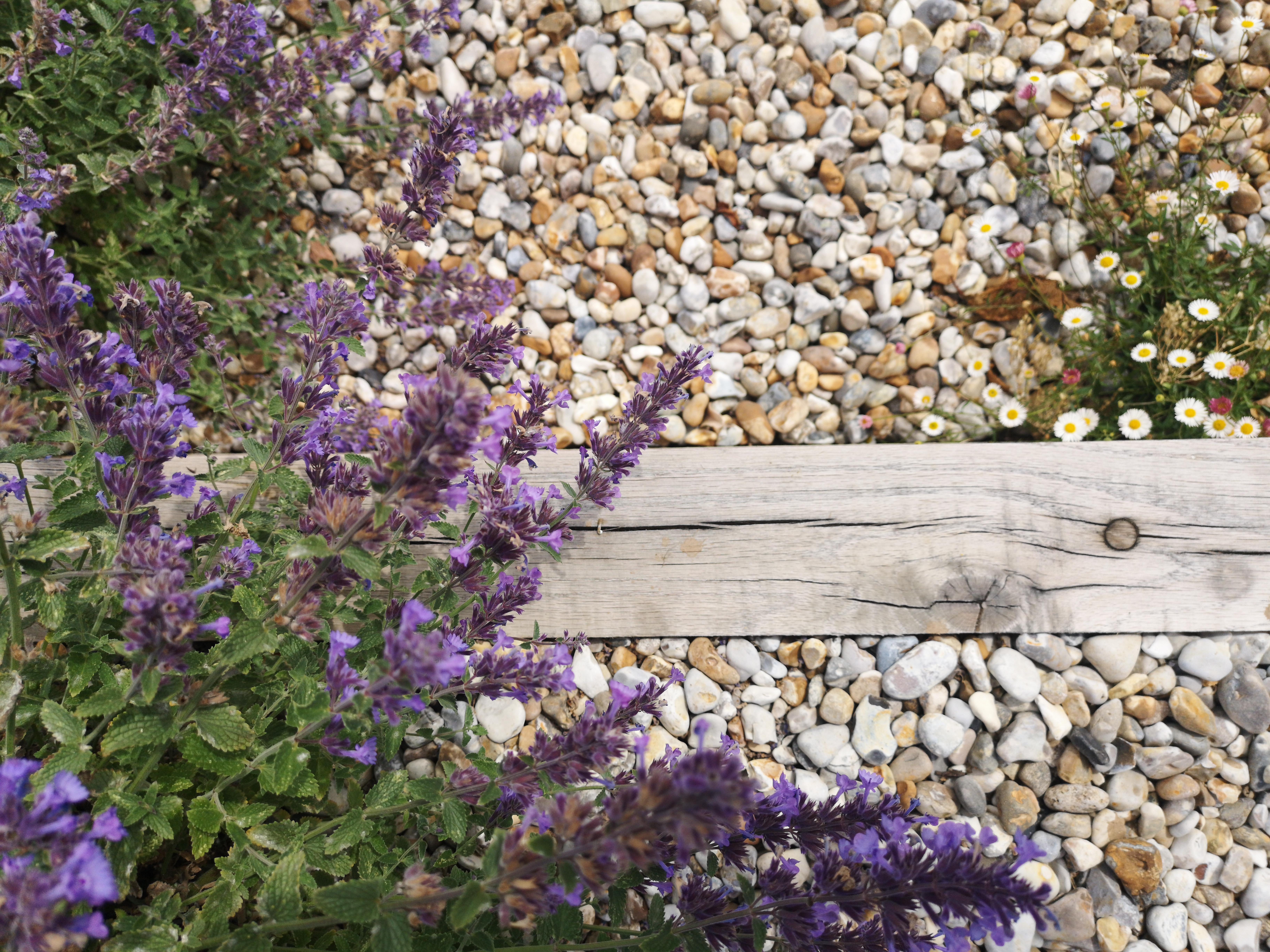 Newquay Coastal garden