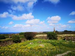 Wild Meadow - Saint Agnes