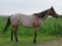 Peppys Tiny Jewel, une jument Quarter Horse vendu par le Loosa-Ranch