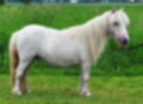 Udeys Little Lady, une jument Appaloosa Miniature Appaloosa vendue par  le Loosa-Ranch