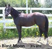 Top Blast Moon, pouliche Appaloosa vendue par le Loosa Ranch