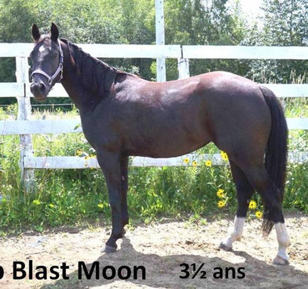 Top Blast Moon, une pouliche Appaloosa vendue par le Loosa-Ranch