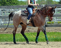 Peppys Tiny Jewel jument Quarter Horse vendue par le Loosa-Ranch