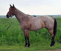 Peppys Tiny Jewel jument Quarter Horse vendue par le Loosa Ranch