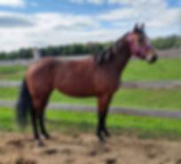 Running Wild Fire, jument Quarter Horse du Loosa Ranch