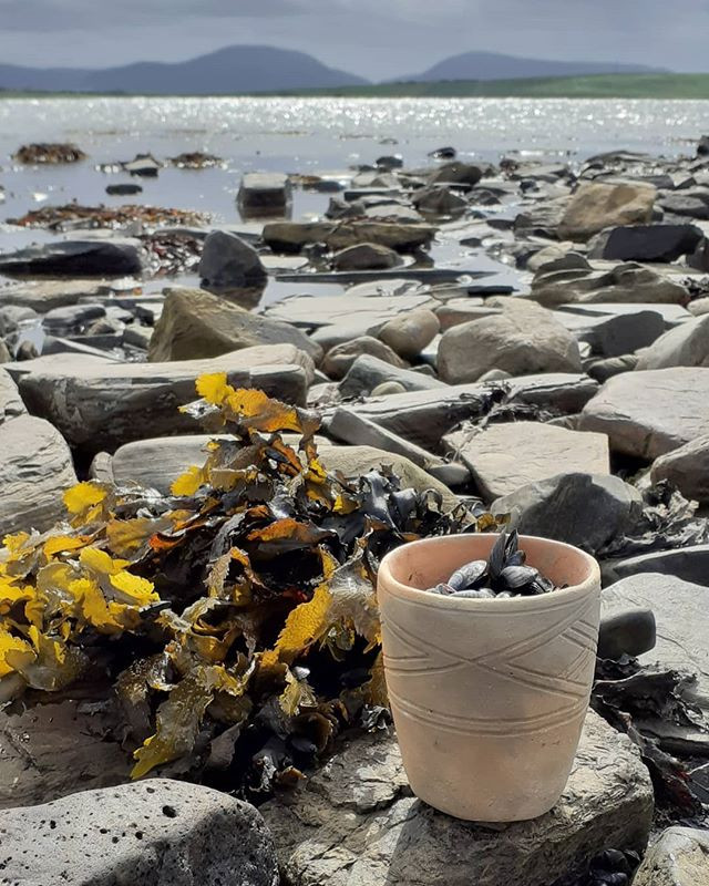 Grooved ware pot with mussels and seaweed