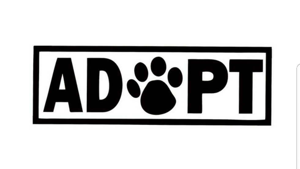 Adopt Car Decal