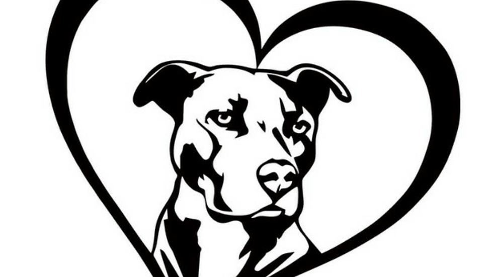 Pit bull in Heart Car Decal