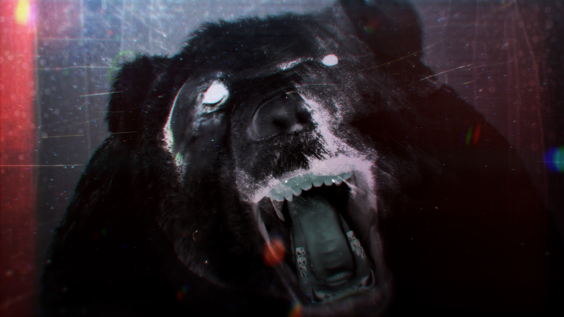 Bear001.jpg