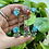 Thumbnail: Gemstone Leaf Bracelet
