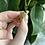 Thumbnail: Bumblebee Jasper Necklace