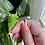 Thumbnail: Nephrite Jade Ring