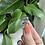 Thumbnail: Seraphinite Ring