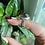 Thumbnail: Garden Quartz/Lodalite Ring