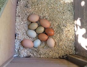 odessa ten eggs.jpg