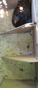 Odessa nest box 8-23 -- 2.jpg