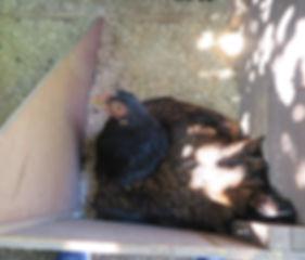 Odessa nest box 8-24.jpg