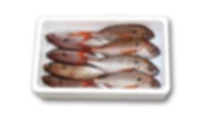 fish_polystyrene_box.jpg