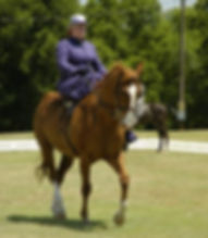 side saddle, sidesaddle, ride side saddle, ride aside, ride sidesaddle, how to ride side saddle, how to fit a side saddle, annual gathering, international side saddle organization, isso, susan young and bingo