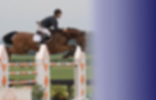 NJ horse and rider training Torsilieri Show Stables boarding board horse jumper jumping NJ NY PA WEF Aiken