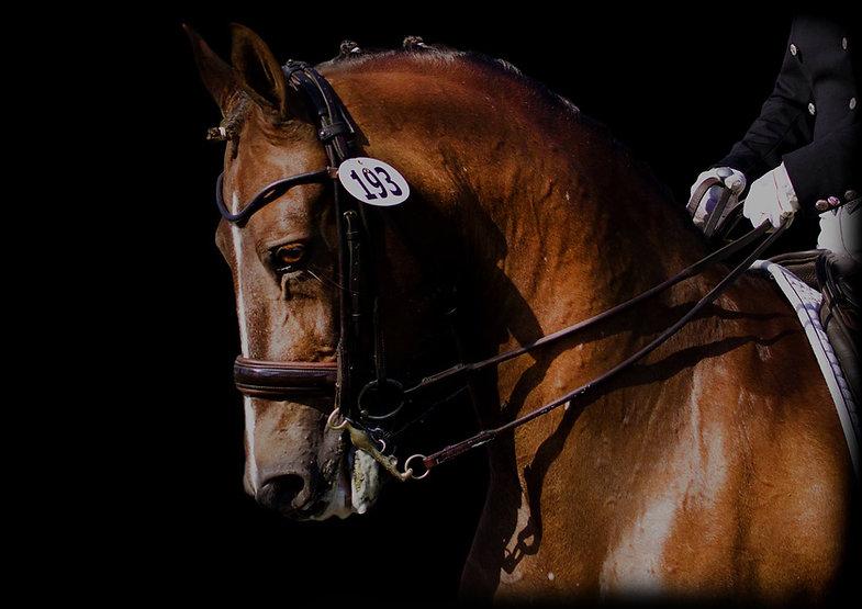 Lauren Chumley, black background, dressage, bucks county horse park, photograher of the bucks county horse park, photographer of BCHP, duncraven horse show photography, duncraven horse show photographer